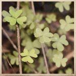 greenfriday-sale